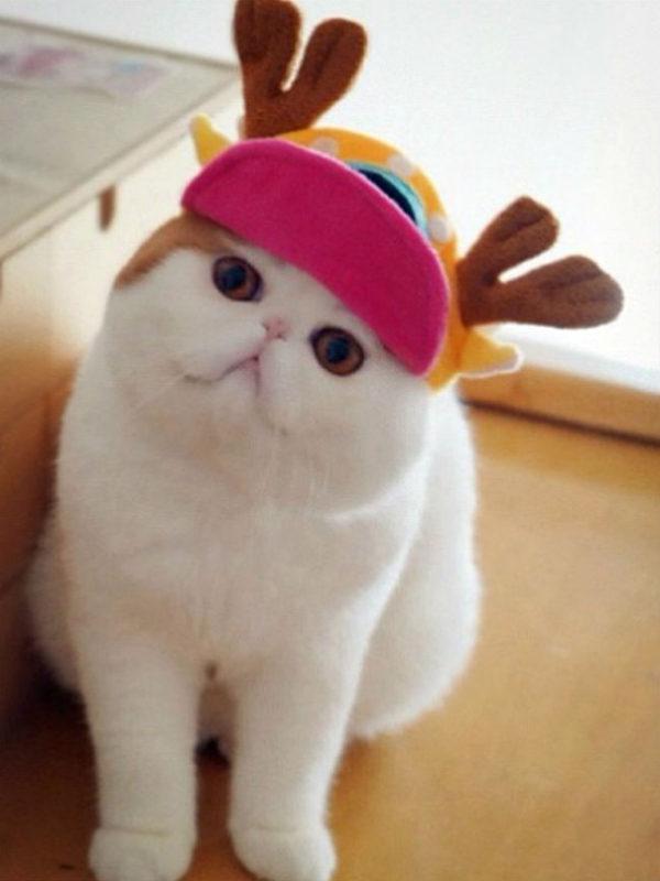 como-hacer-disfraces-de-navidad-para-perros-y-gatos-gorra-de-reno