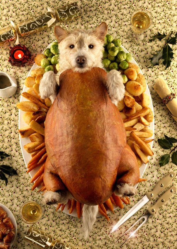 como-hacer-disfraces-de-navidad-para-perros-y-gatos-pavo-de-navidad