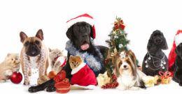 Disfraces de navidad graciosos para perros y gatos – Fotos