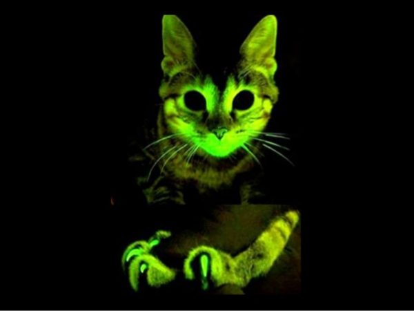 las-10-mejores-mascotas-exoticas-de-moda-gatos-fluorescentes