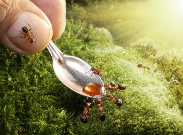 las-10-mejores-mascotas-exoticas-de-moda-granja-hormigas-2