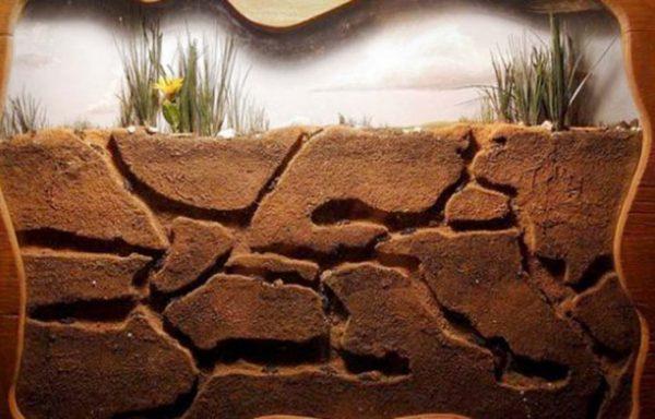 las-10-mejores-mascotas-exoticas-de-moda-granja-hormigas