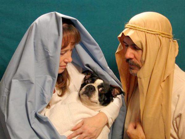 postales-de-animales-graciosos-para-navidad-perro-como-jesus