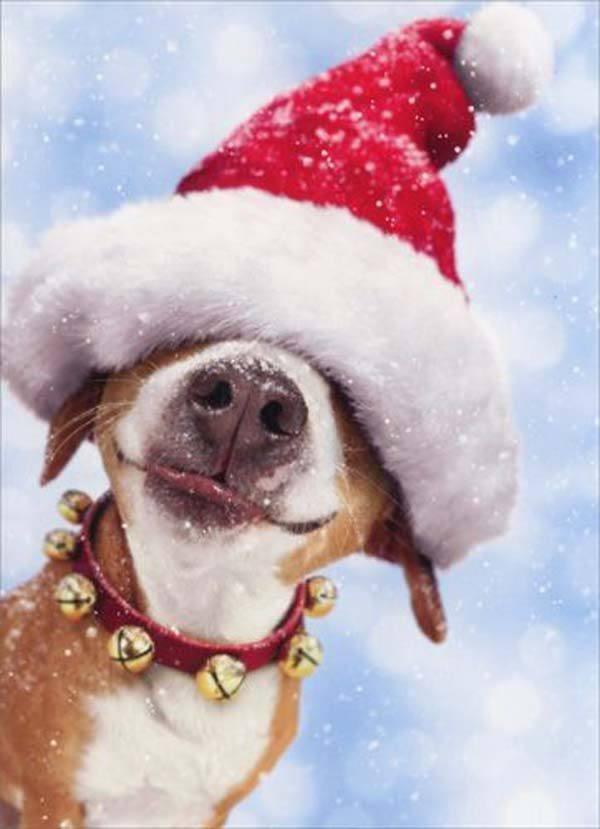 postales-de-animales-graciosos-para-navidad-perro-tapado-con-gorro