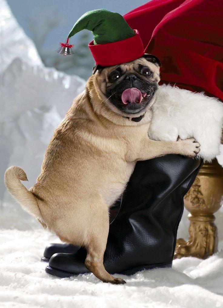 Postales De Animales Para Navidad 2020 Animalesmascotas