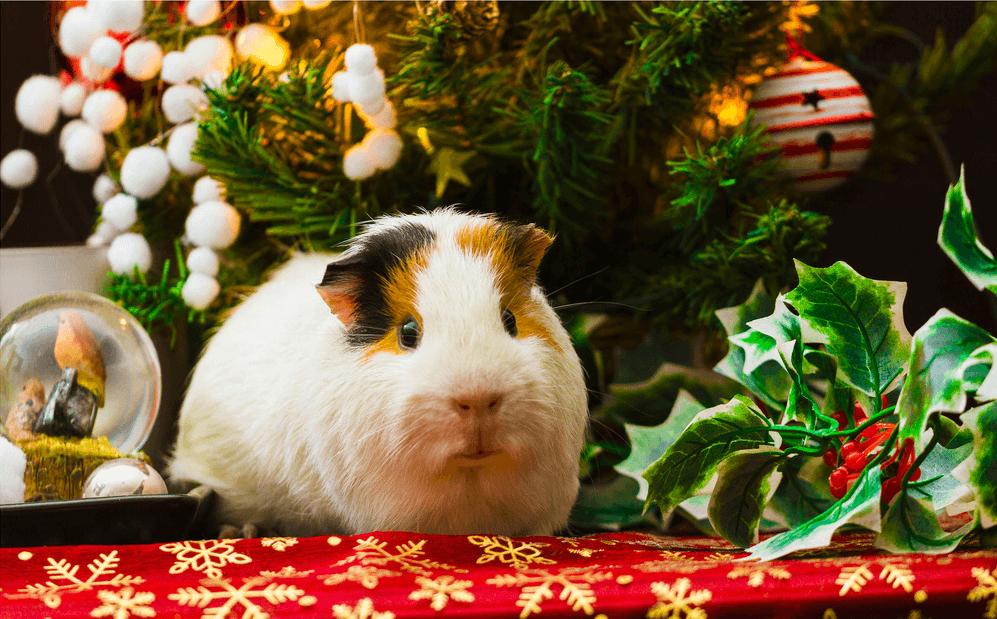 Postales De Animales Para Navidad 2020