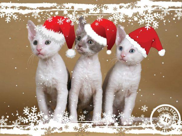 postales-de-animales-para-navidad-para-imprimir-tres-gatos