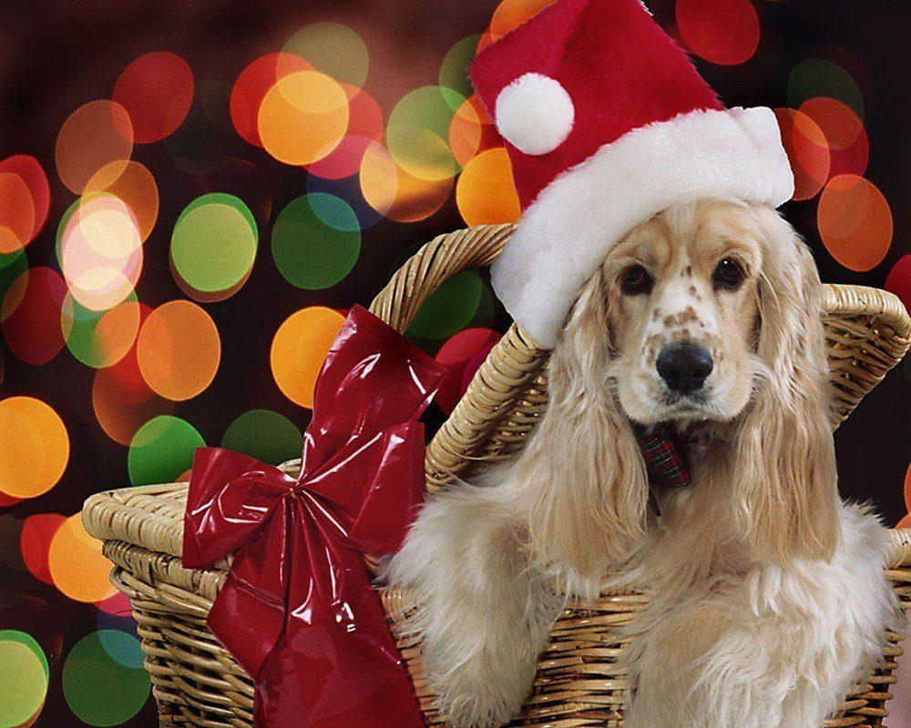 postales-de-animales-para-navidad-para-imprimir