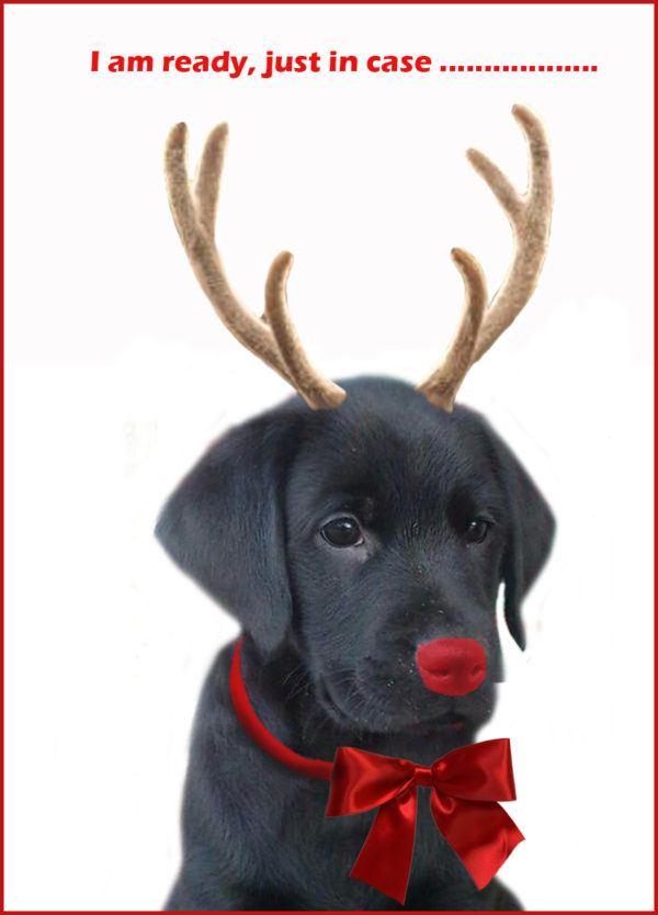 postales-de-animales-tiernos-para-navidad-perro
