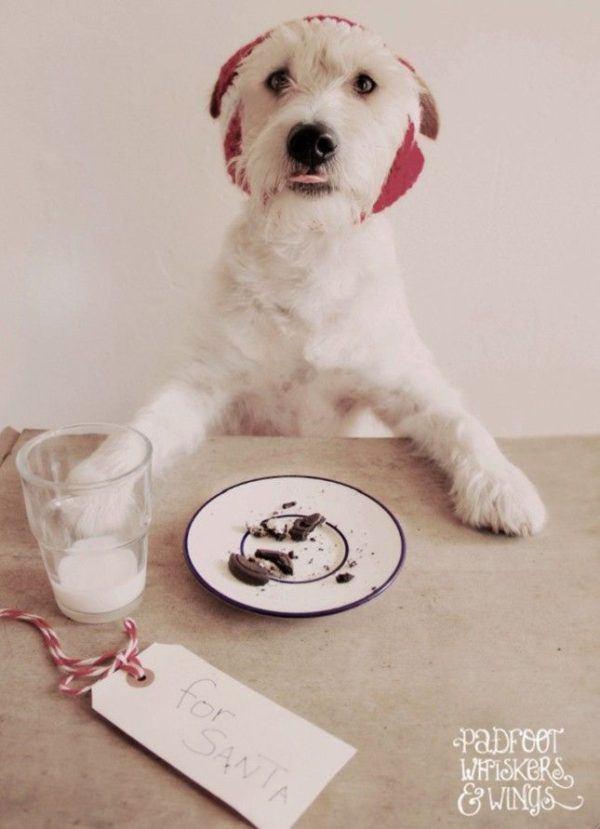 postales-de-animales-tiernos-para-navidad-perro-comiendo-galletas