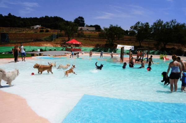 Las piscinas de espa a en d nde se pueden ba ar con perros - Tamanos de piscinas ...