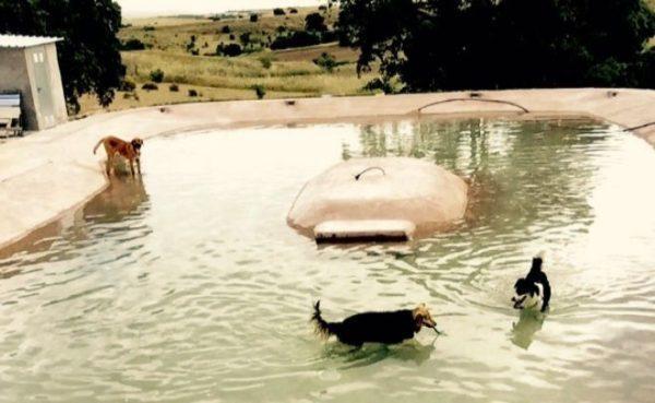 Las piscinas de espa a en d nde se pueden ba ar con perros for Piscina playa de madrid