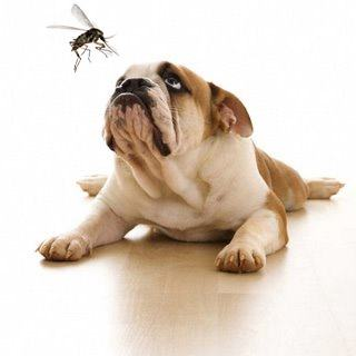 alergia-canina-prevencion-contacto
