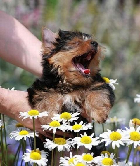 alergia-canina-prevencion-inhalacion