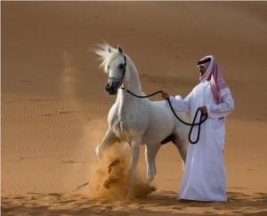como-son-los-caballos-arabes-desierto
