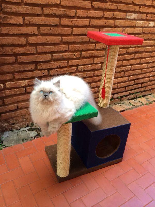 gato-persa-cuidados-uñas