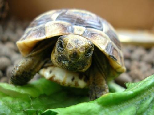 cuidados-de-las-tortugas-1