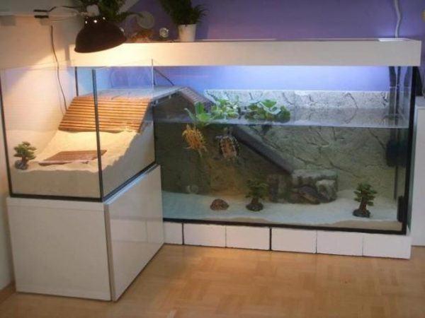 cuidados-de-las-tortugas-acuario
