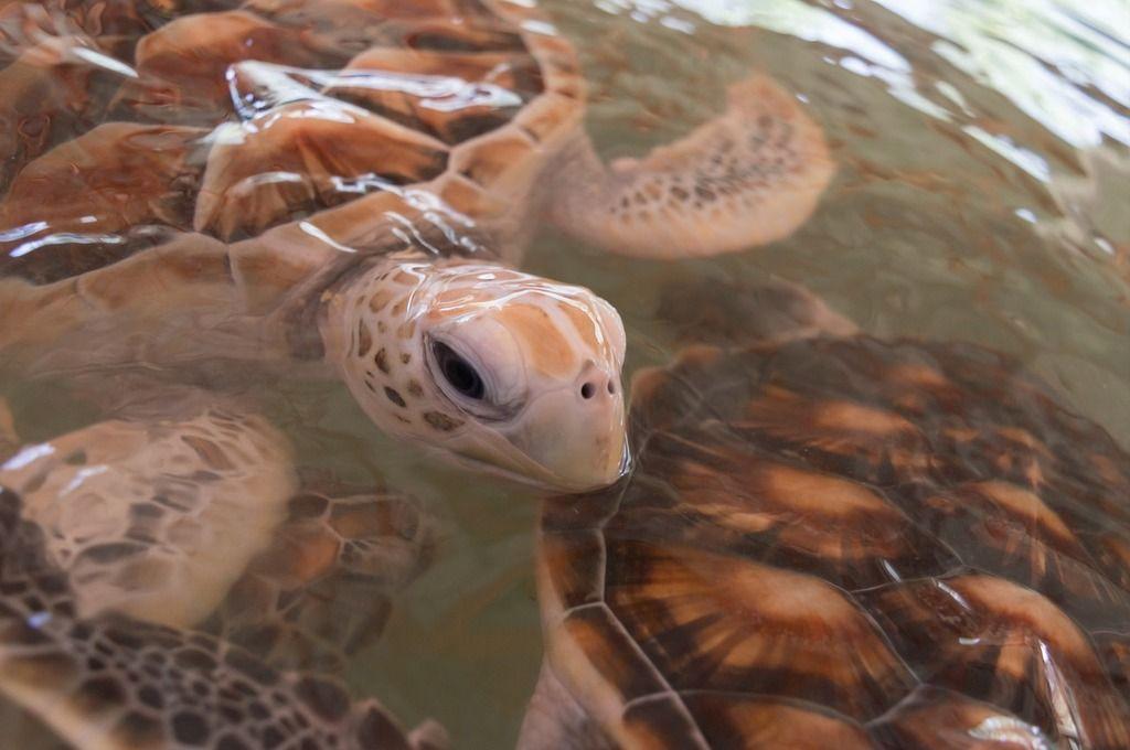 cuidados-tortugas-acuaticas
