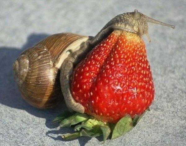 que-comen-caracoles