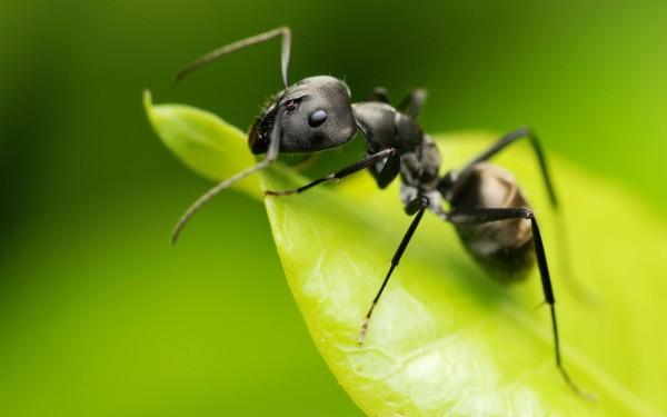 que-comen-las-lagartijas-insectos