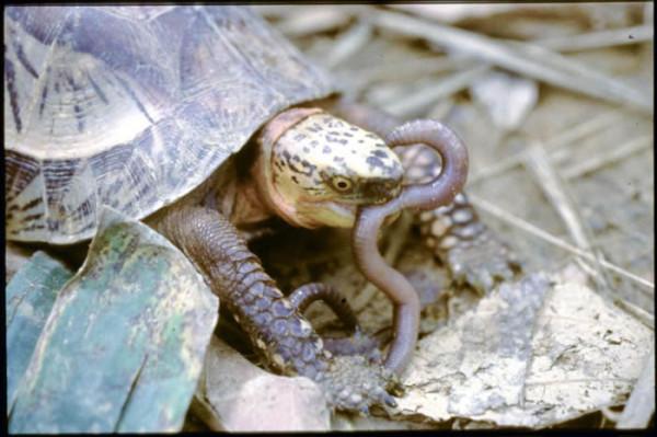 que-no-deben-comer-las-tortugas