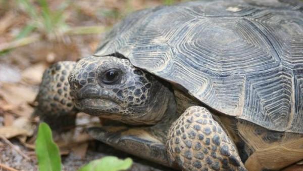 tortugas-que-comen