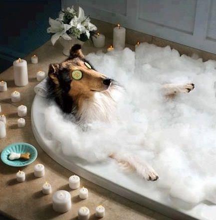 embarazo-de-un-perro-riesgos-baños