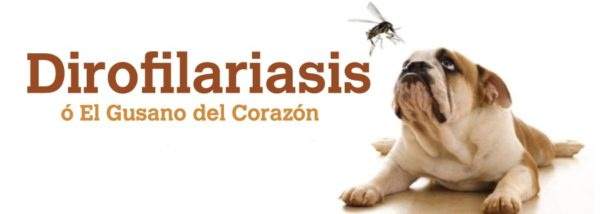 gusanos-del-corazon-parasitos-en-perros-gusano