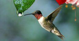 Pájaros tropicales y aves exóticas