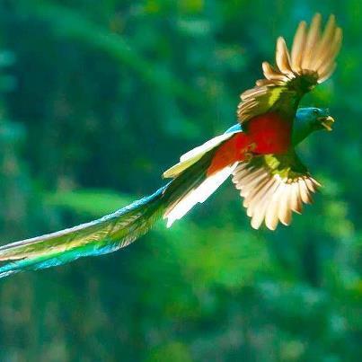 Tipos de p jaros y aves ex ticos y tropicales for Imagenes de jardines exoticos