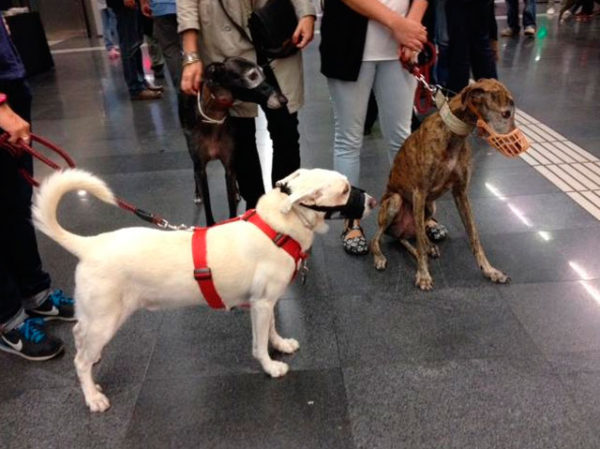 perros-viajar-metro-de-madrid
