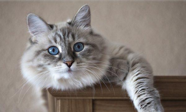 Conoce las plantas venenosas para gatos animalesmascotas Plantas seguras para gatos