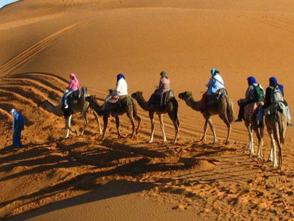 camello-de-arabia-desierto