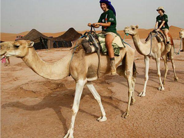 camello-de-arabia-excursión