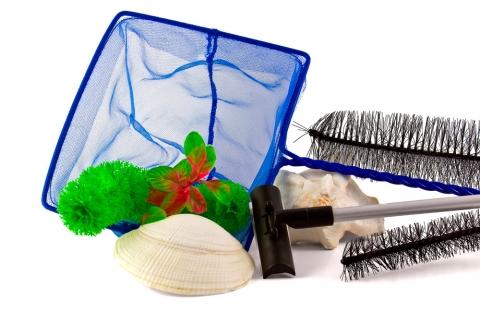 como-cuidar-un-pez-betta-limpieza-acuario