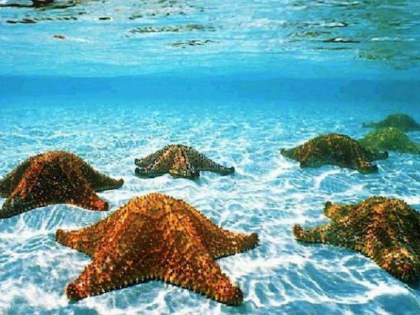 estrella-de-mar-fondo