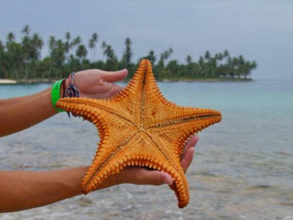 estrella-de-mar-grande