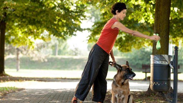 heces-amarillas-en-perros-causas-y-tratamiento-limpieza