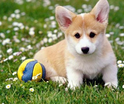 heces-amarillas-en-perros-causas-y-tratamiento-perrete