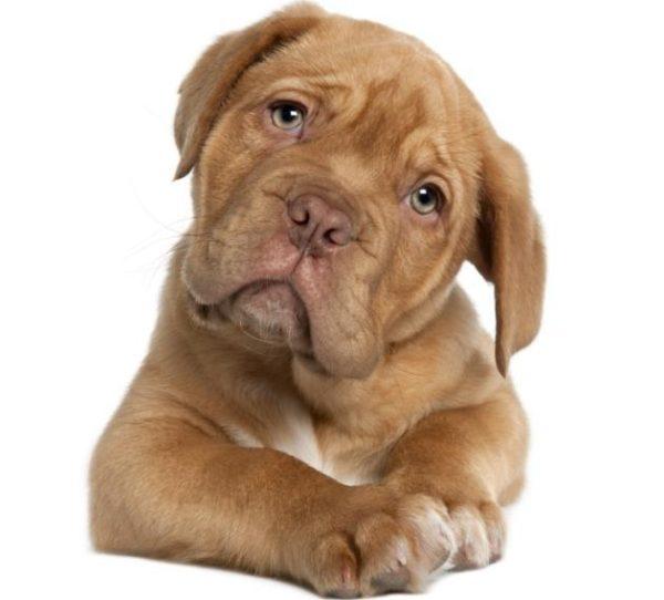 heces-amarillas-en-perros-causas-y-tratamiento-tratamiento