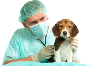 heces-amarillas-en-perros-causas-y-tratamiento-veterinario
