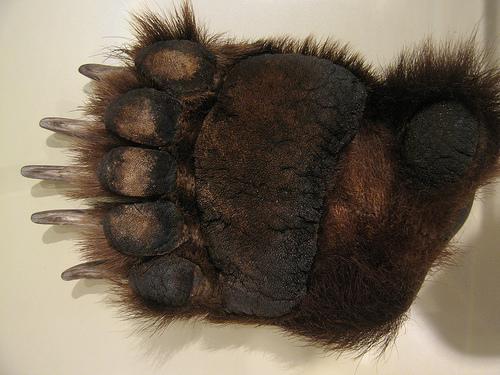 panda-gigante-pata