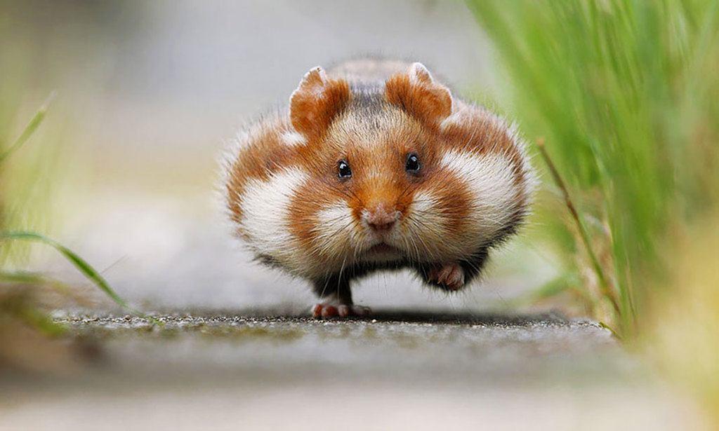 Animales omnívoros - Clasificación, anatomía y Fotos de animales ...