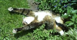 Conoce las plantas venenosas para gatos