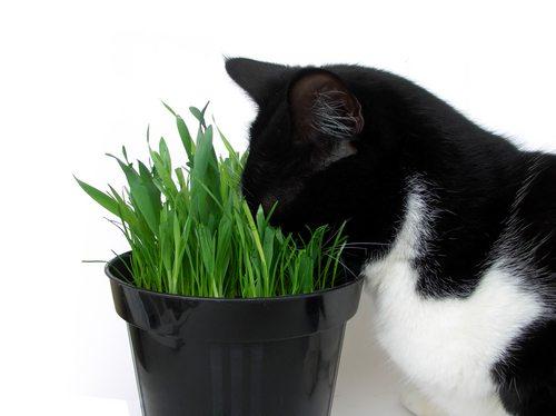 conoce las plantas venenosas para gatos animalesmascotas
