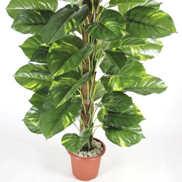 Conoce las plantas venenosas para gatos animalesmascotas for Plantas de interior hojas grandes