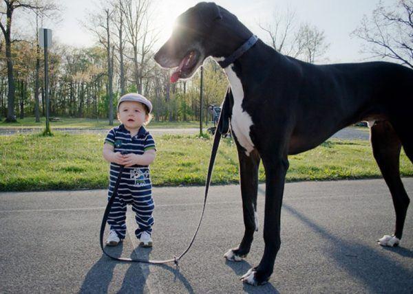 10-consejos-para-elegir-una-mascota-9