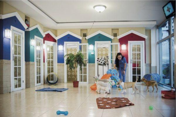 10-consejos-para-elegir-una-mascota-hoteles-perros