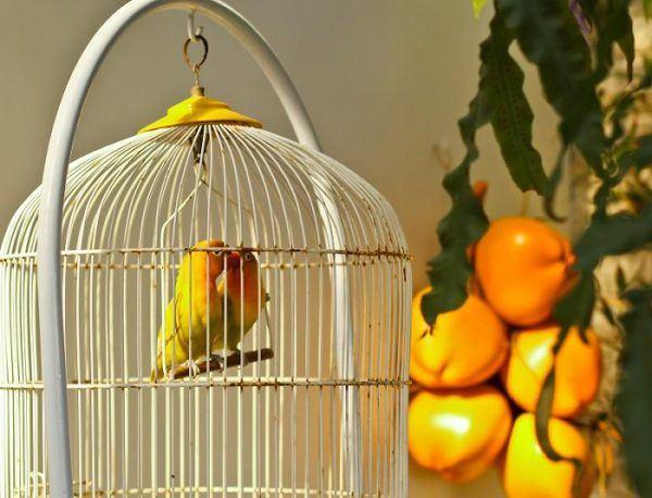 10-consejos-para-elegir-una-mascota-jaula